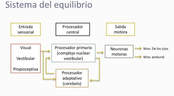 El sistema vestibular y su importancia en los niños